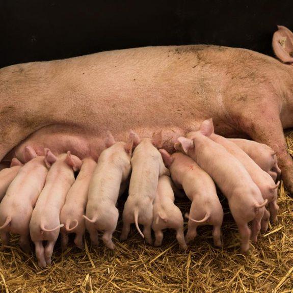 Terres de Breizh Fermes des Courtrais maternité
